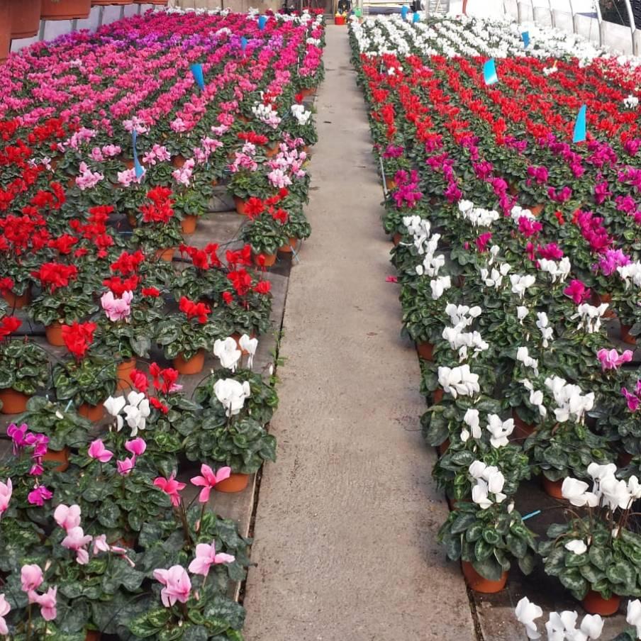 Vendita piante per giardinieri