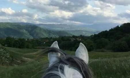 Passeggiata a cavallo nel bosco singola